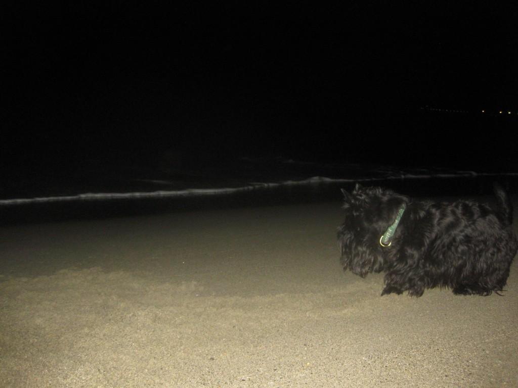 Macadam on the Beach, November, 2009