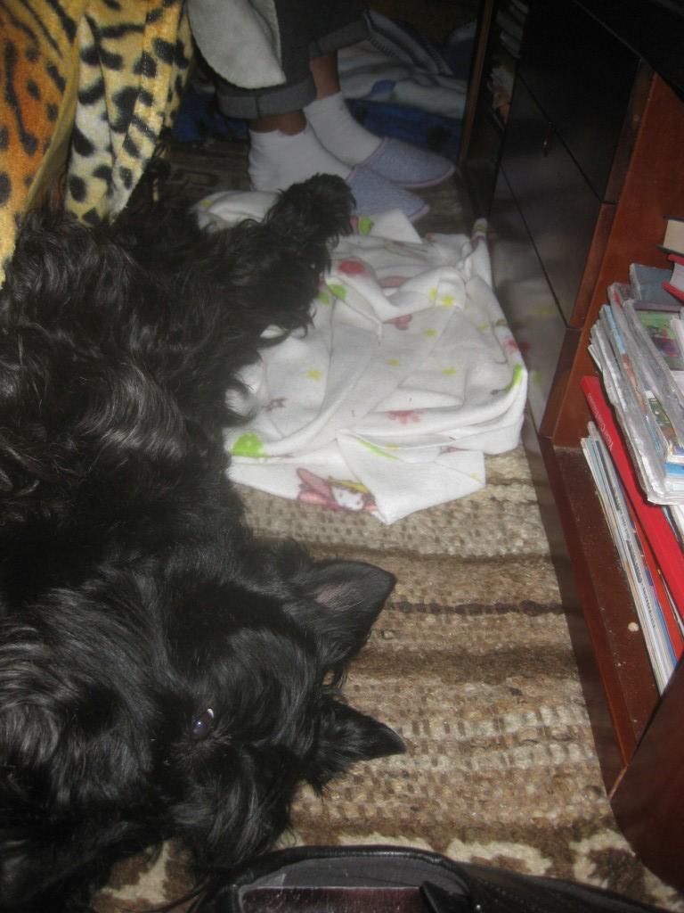 Macadam Sleeping in Early 2010