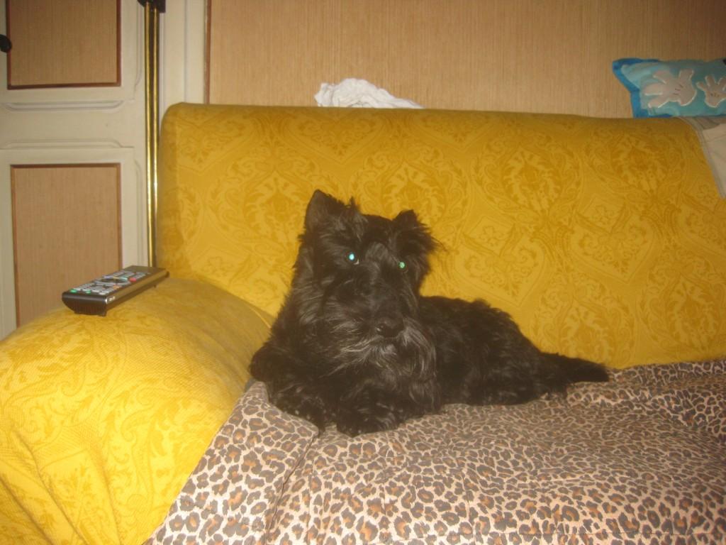 Macadam on Sofa, in 2010