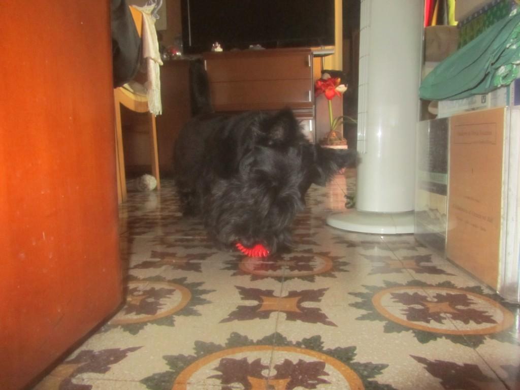 Macadam playing with Birthday Balls