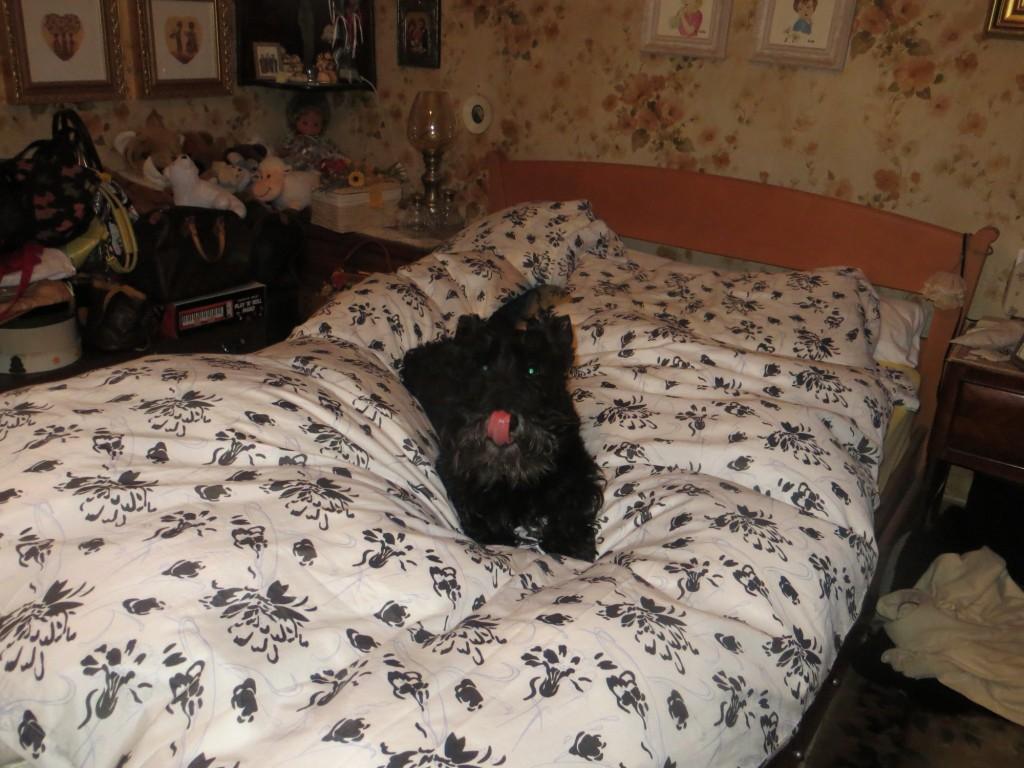 Macadam on Bed 2014